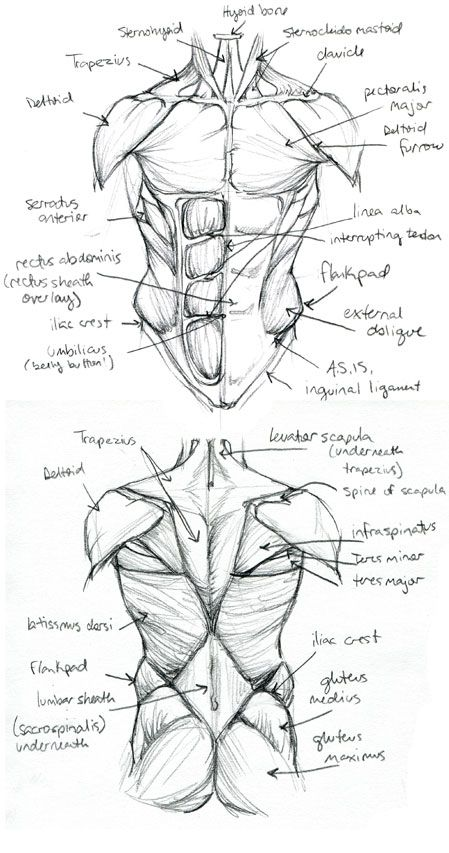 449x853 4336 Best Drawings Images On Drawing Tutorials