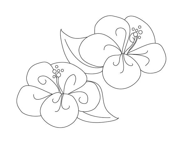 Fancy Flower Drawing