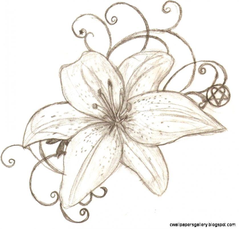 839x805 Drawn Lily Fancy Flower