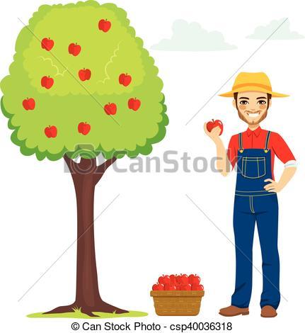 431x470 Farmer Picking Apple. Young Farmer Man Picking Apple