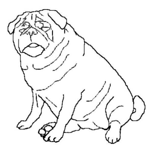 Fat Dog Drawing