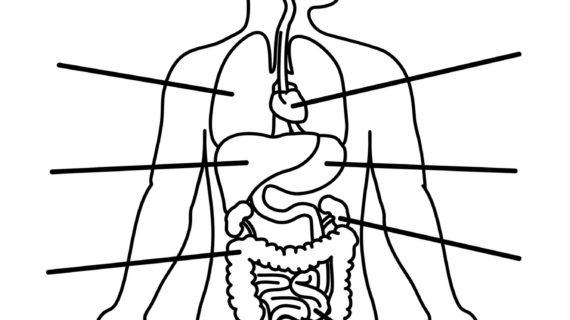 570x320 Outline Drawing Of Human Body Human Body Anatomy Outline Printable