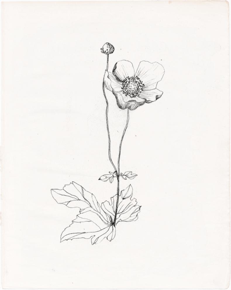 790x989 Flower Drawing Tumblr Wildflower Drawing Tumblr Drawing