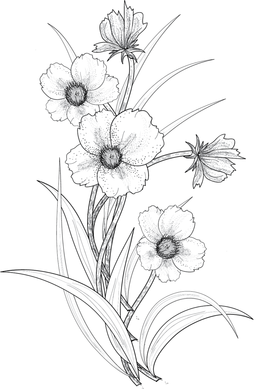 900x1311 Collection Of Flower Drawing Tumblr Transparent High Quality