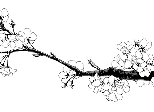 Flower Drawing Tumblr Transparent at GetDrawings com | Free