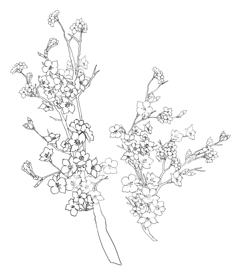 500x571 Collection Of Tumblr Flower Drawing Transparent High Quality