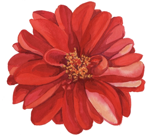 500x464 Flower Clipart Tumblr Image Result For Transparent Flower Drawing