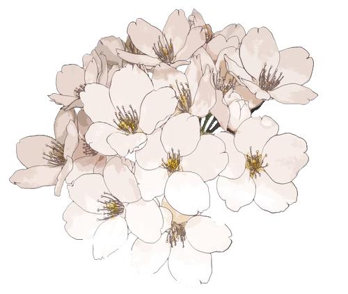 500x423 Tumblr Ship Transparent Flowers Transparent Black And White