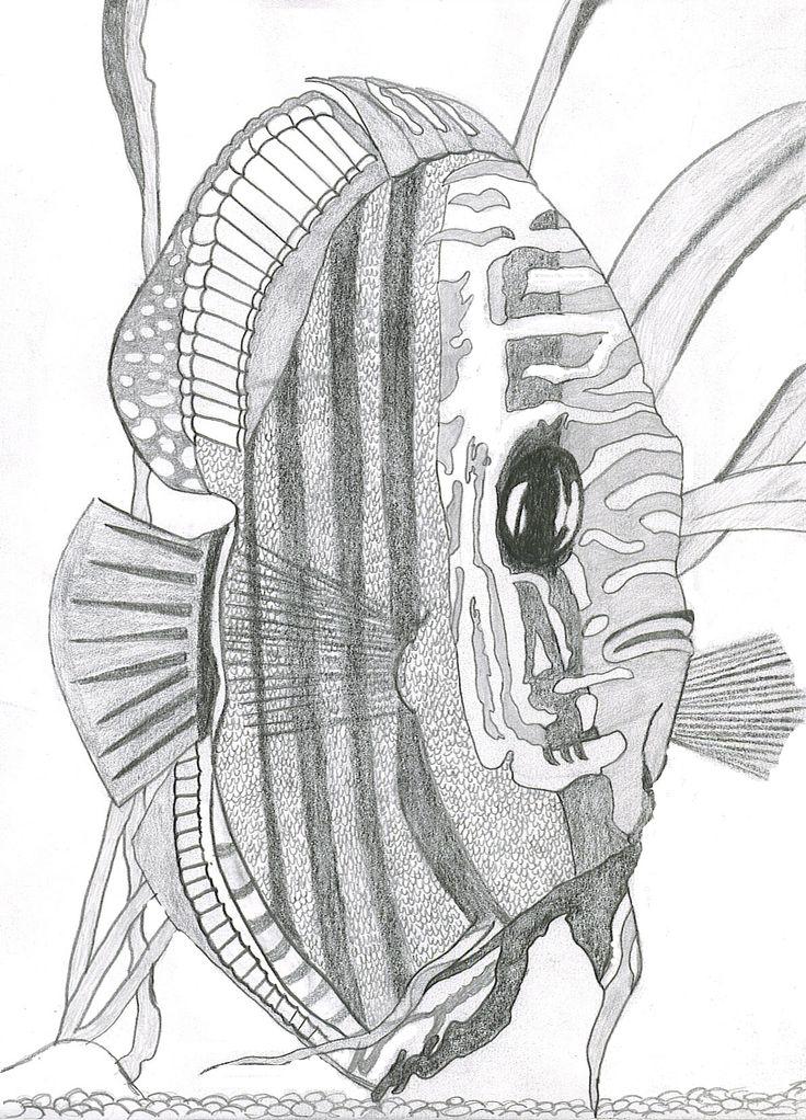 736x1022 96 Best Vissen Schilderentekenen Images On Fish Art