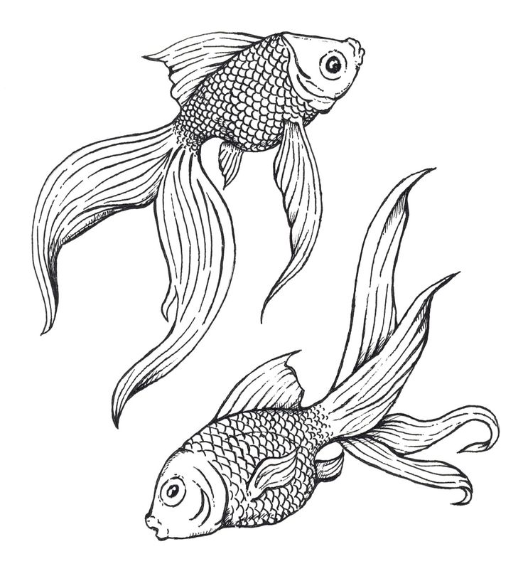 736x810 The 57 Best Coloring Pisces Images On Pisces, Fish