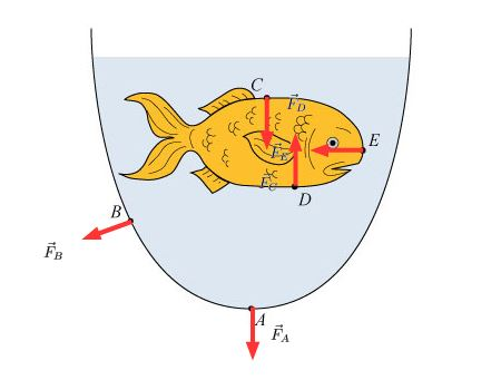 450x341 Force On A Goldfish Vector Drawing