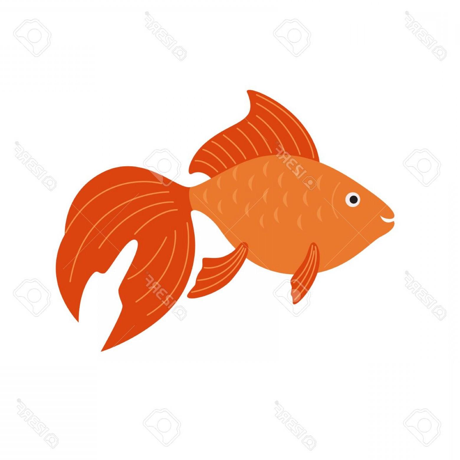 1560x1560 Photostock Vector Goldfish Vector Aquarium Fish Illustration