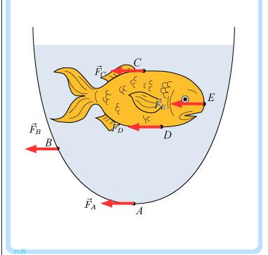 382x363 Solved A Fishbowl Contains A Single Goldfish And Is Fille