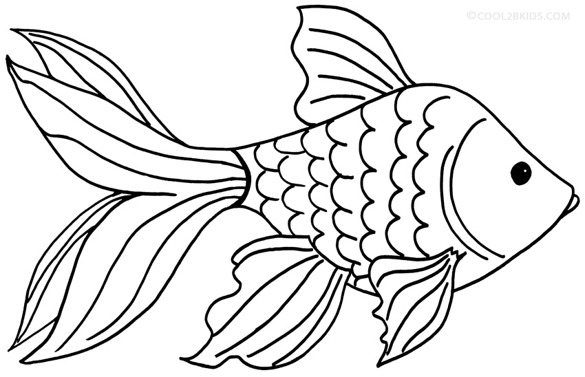 850x548 Collection Of Goldfish Drawing Colour High Quality, Free