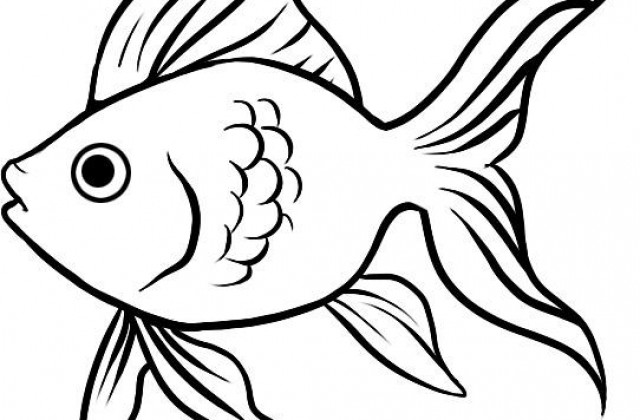 640x420 Collection Of Goldfish Drawing Easy High Quality, Free