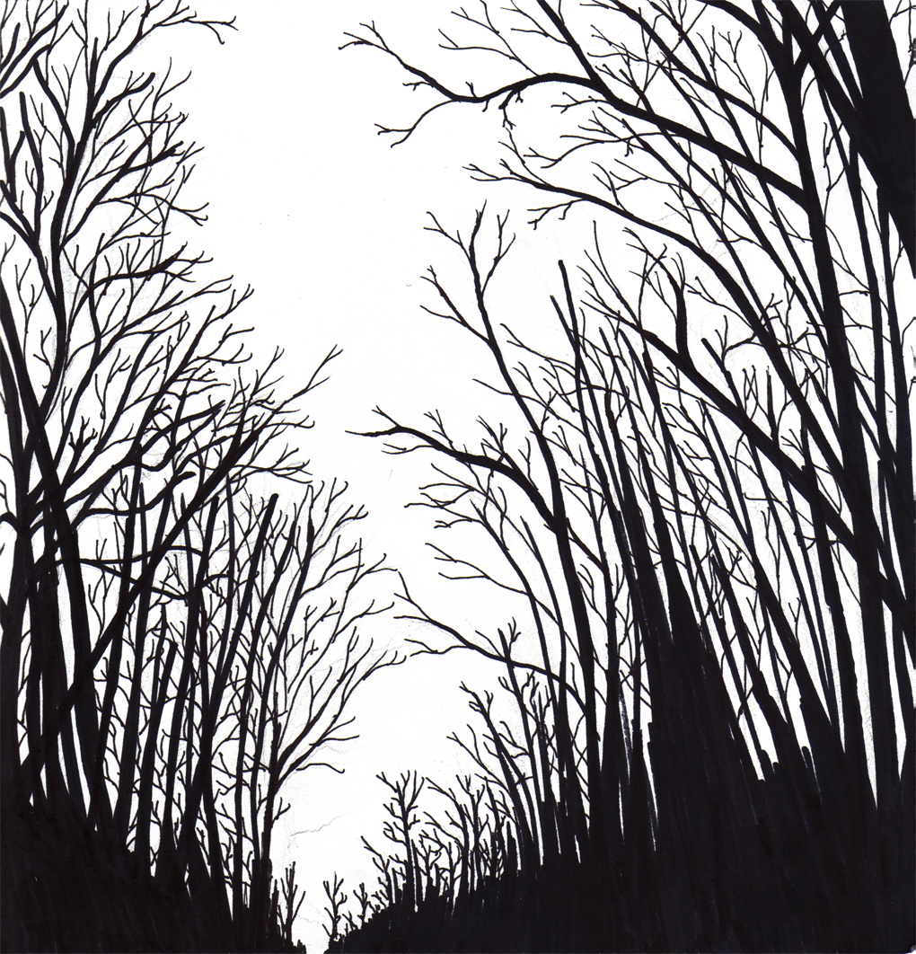 Forest Black And White Drawing