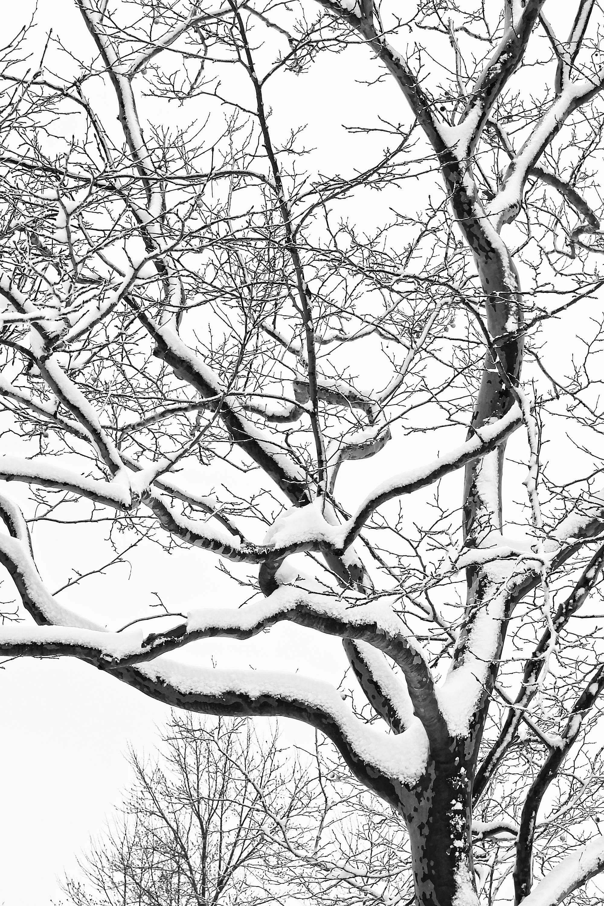 2000x3000 Tree Photography, Black And White, Cape Cod Photography, Forest