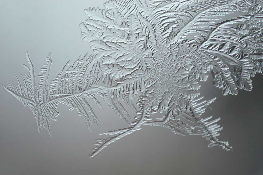 1000x664 Frost Growth Draw And Shoot