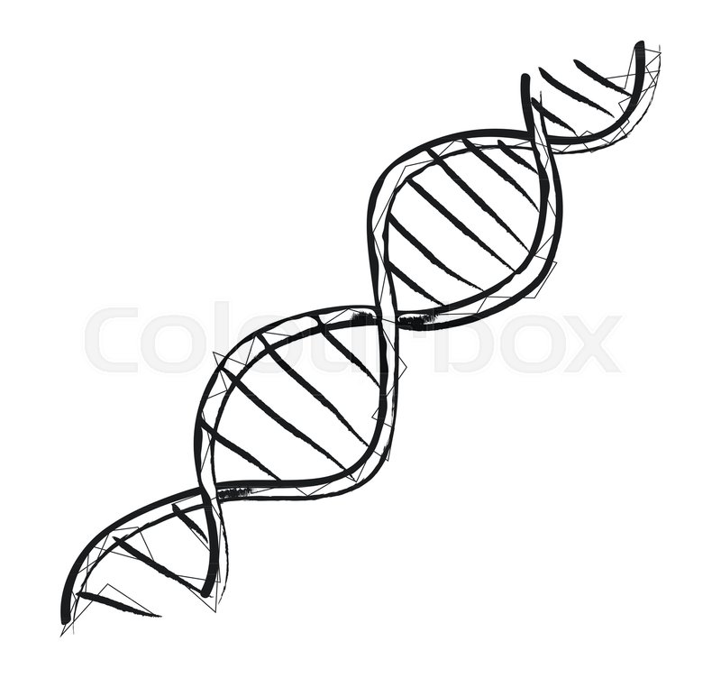 800x752 Dna Code Structure With Chromosomes Radiate Light Line Sketch