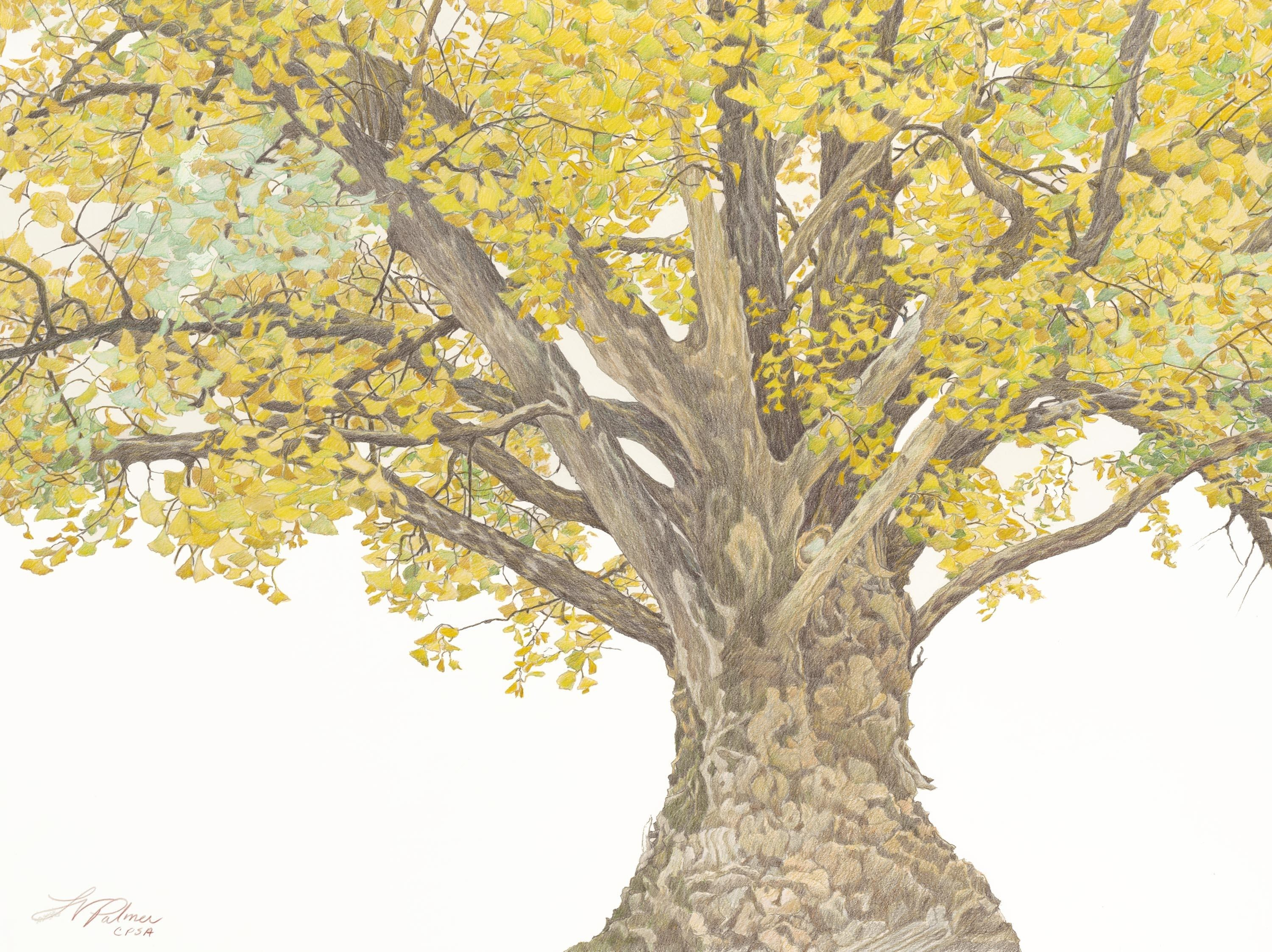 Ginkgo Tree Drawing at GetDrawings.com | Free for personal use ...