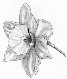 236x276 Gladiolus Flower Tattoo Black And White Charcoal Drawing Flower