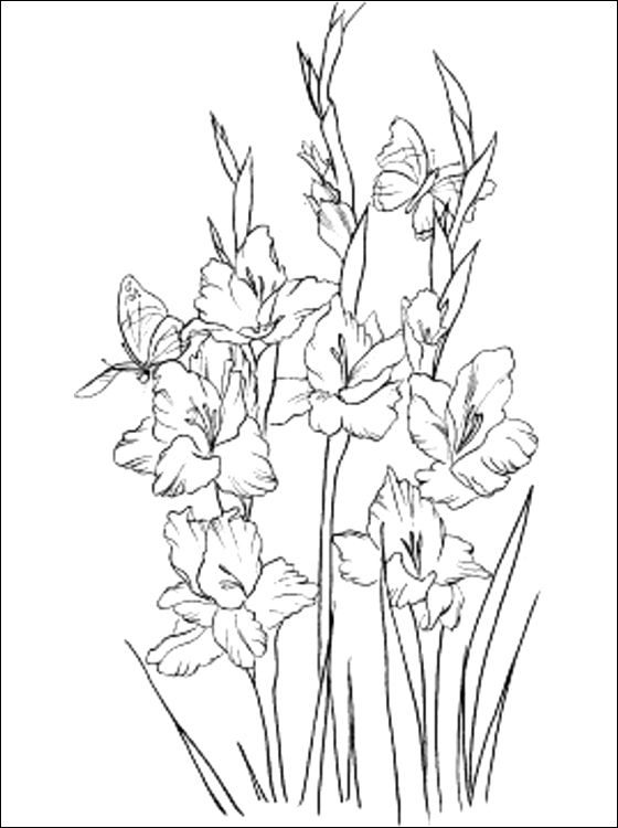 560x750 Gladiolus Coloring Page To Print Out Coloring Pages