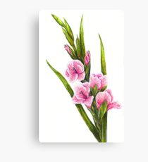 210x230 Gladiolus Drawing Canvas Prints Redbubble