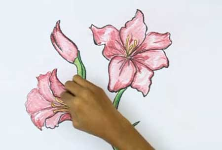 450x305 How To Draw A Gladiolus