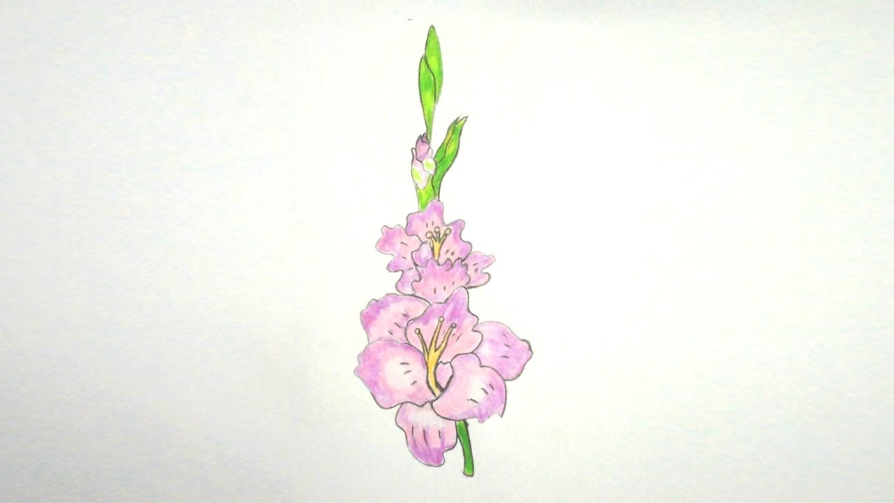 1280x720 How To Draw Gladiolus Flower Step By Step Very Easy