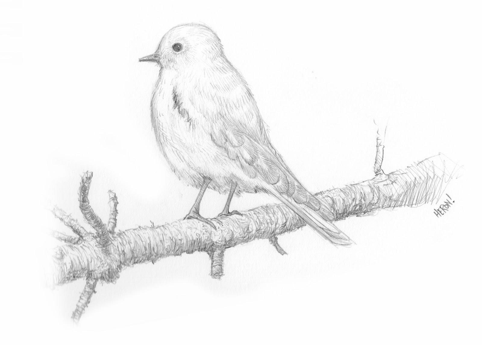 1600x1146 Pretty Good Blog Bird Drawing