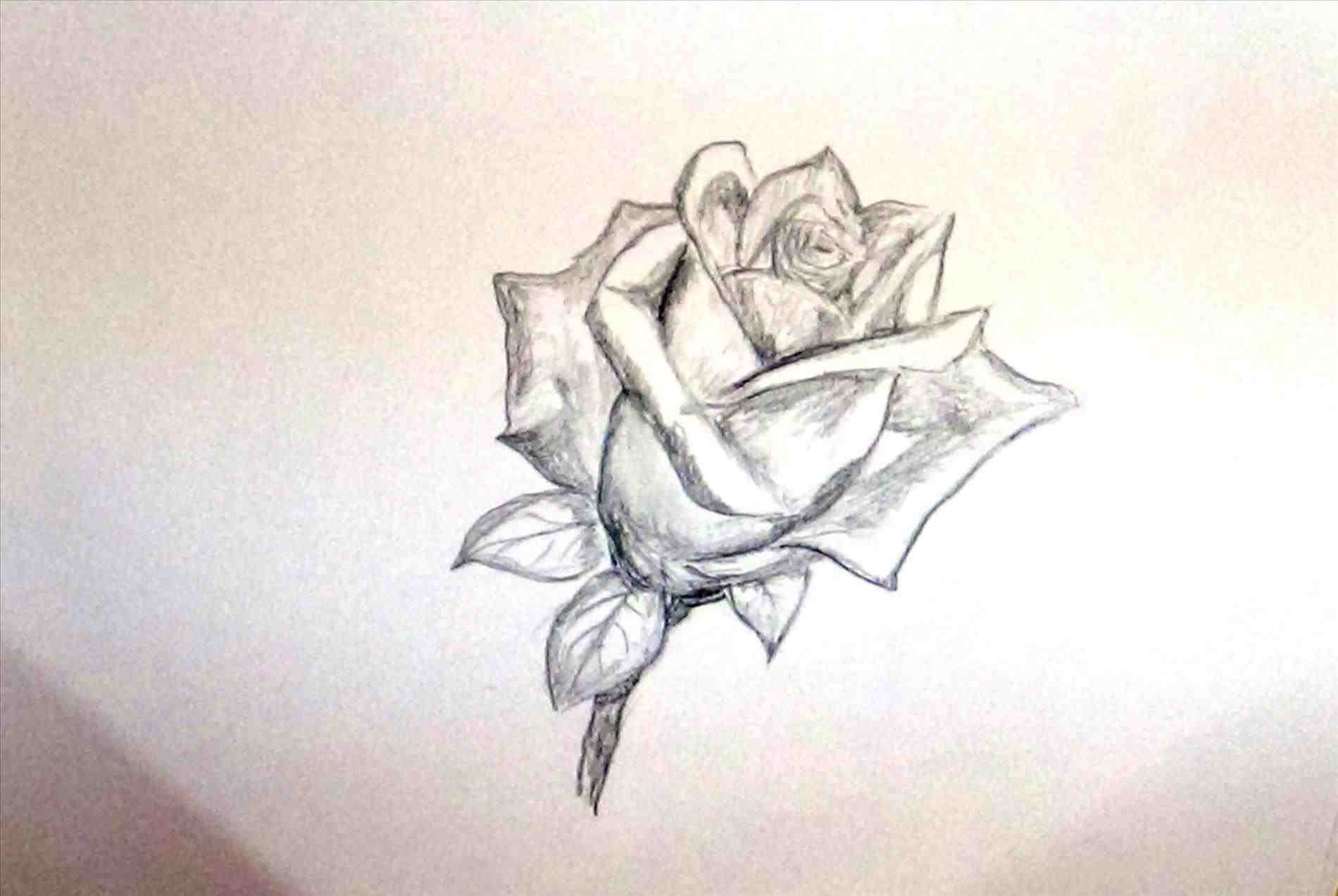 1900x1273 The Images Collection S Drawing Ideas For Beginners Flowers