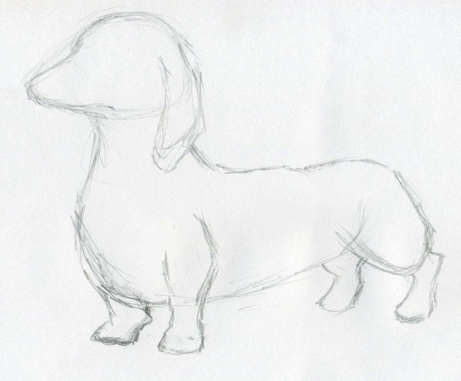941x777 Dog Sketches How To Draw Animals Easy Sketches