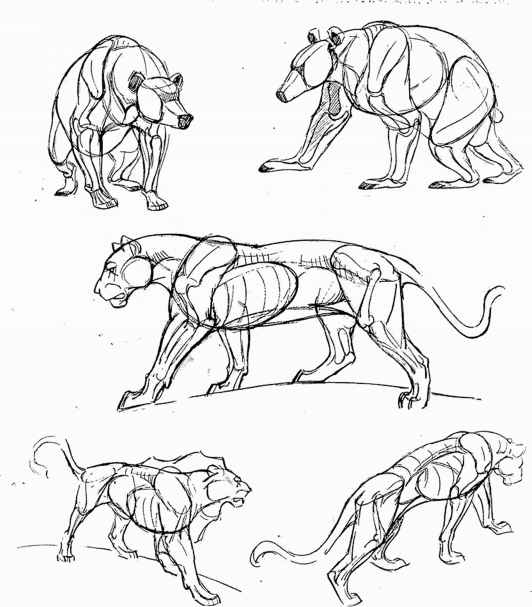 532x607 Tips On Drawing Animals