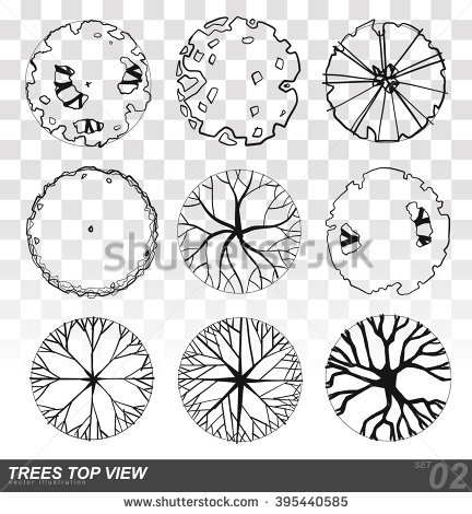 432x470 Collection Of Top View Tree Drawing High Quality, Free