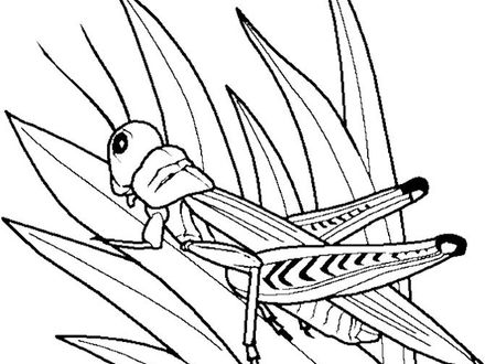 440x330 26 Grasshopper Coloring Page, Grasshopper Coloring Pages To Print