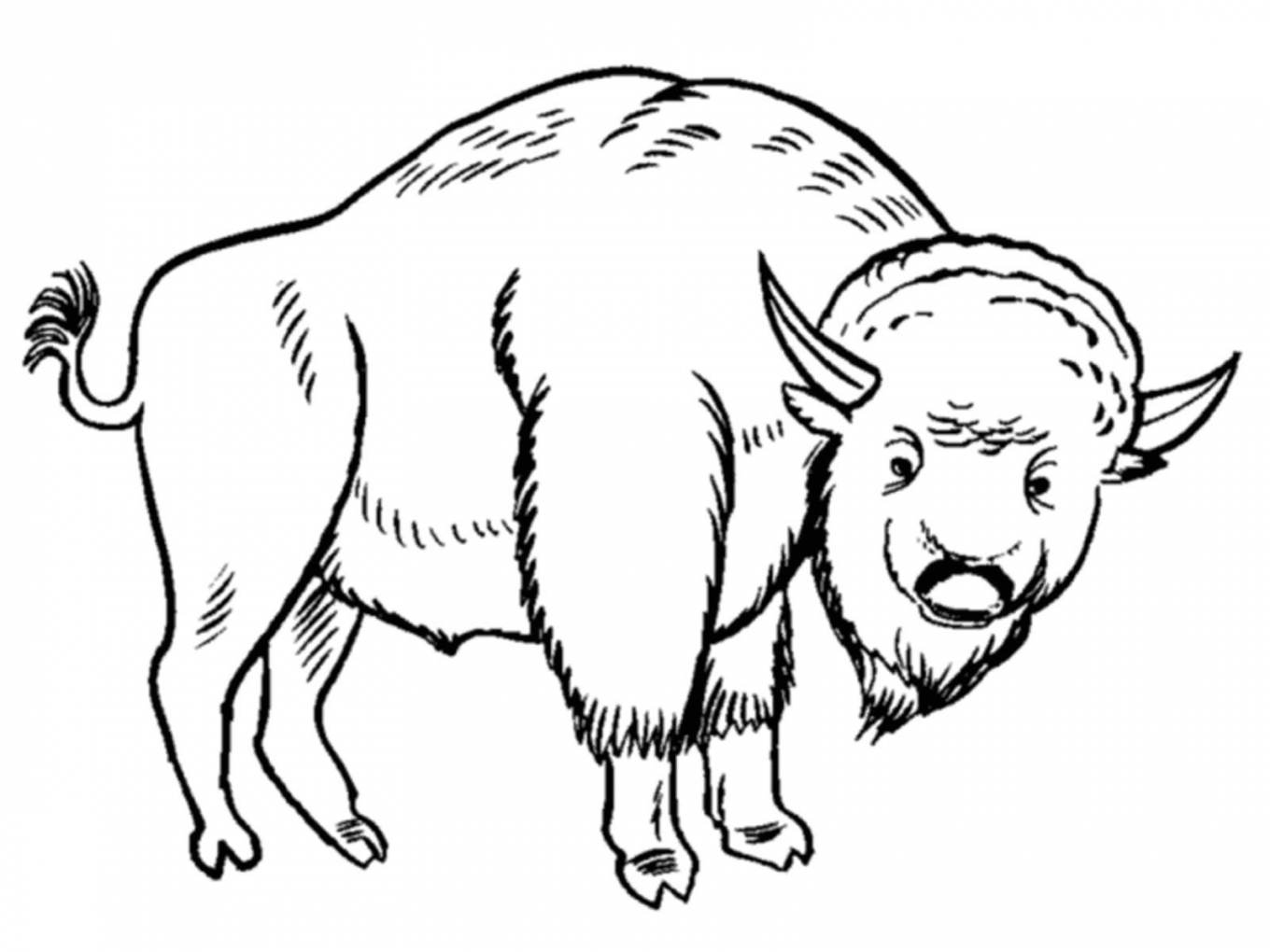 1360x1020 Grassland Animals Coloring Pages