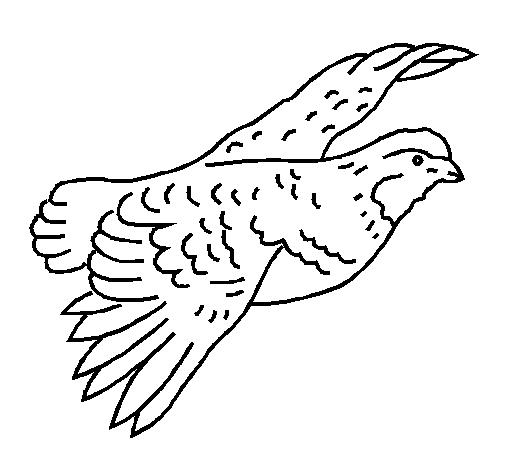 Grouse Drawing
