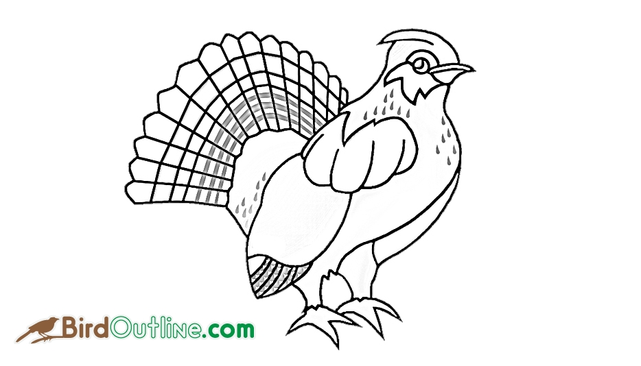 934x534 Grouse Bird Outline @
