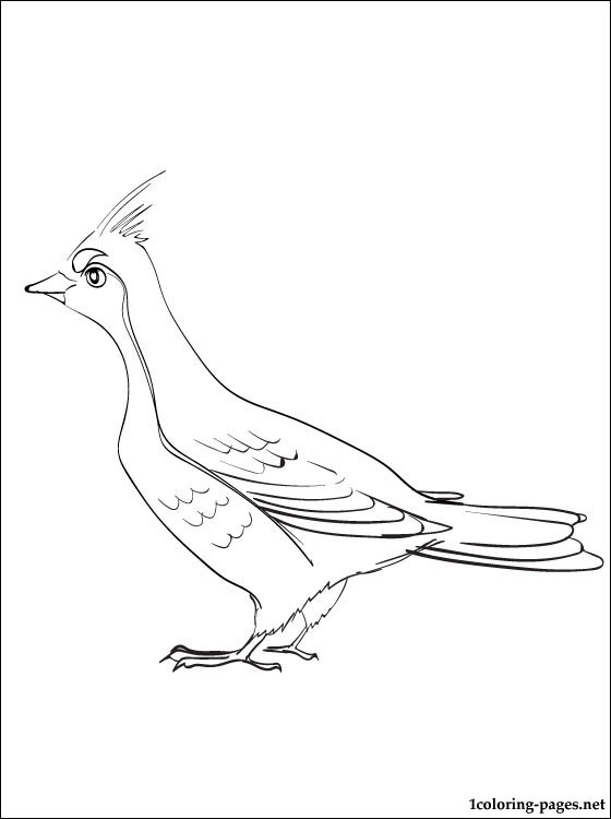 560x750 Grouse Coloring Page For Kids Coloring Pages