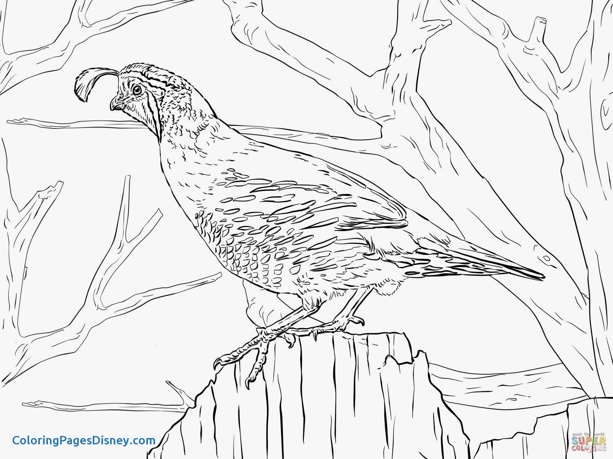 2048x1536 Spotted Tailed Quoll Coloring Pages Elegant The Best 100 Grouse