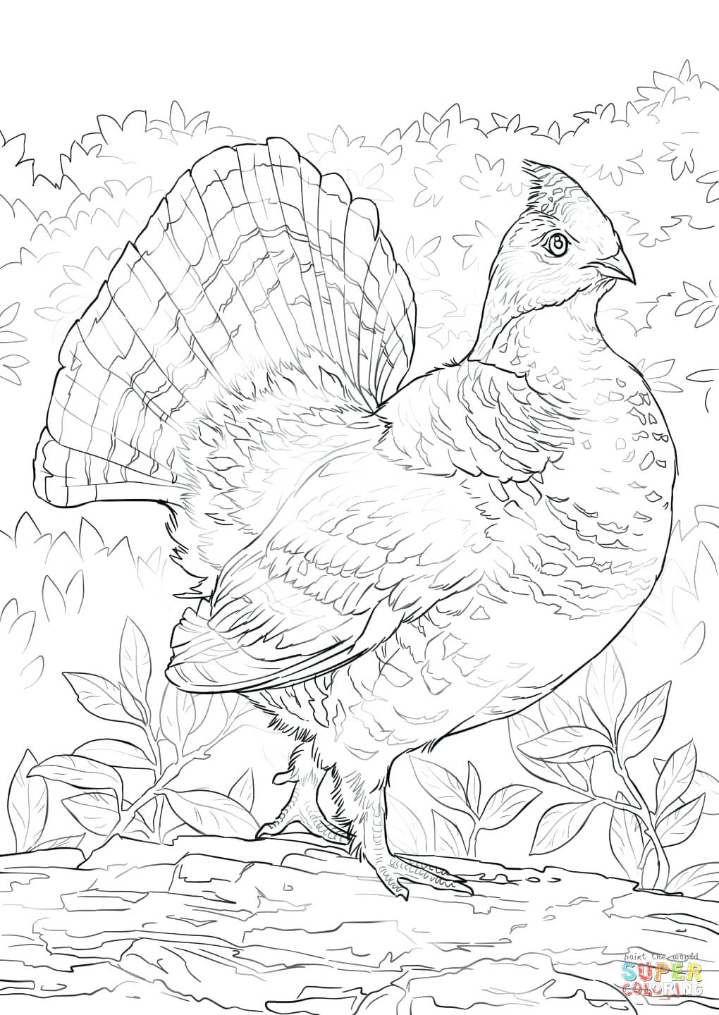 1020x1440 Click The Ruffed Grouse Coloring Pages Ruffed Grouse Coloring Page