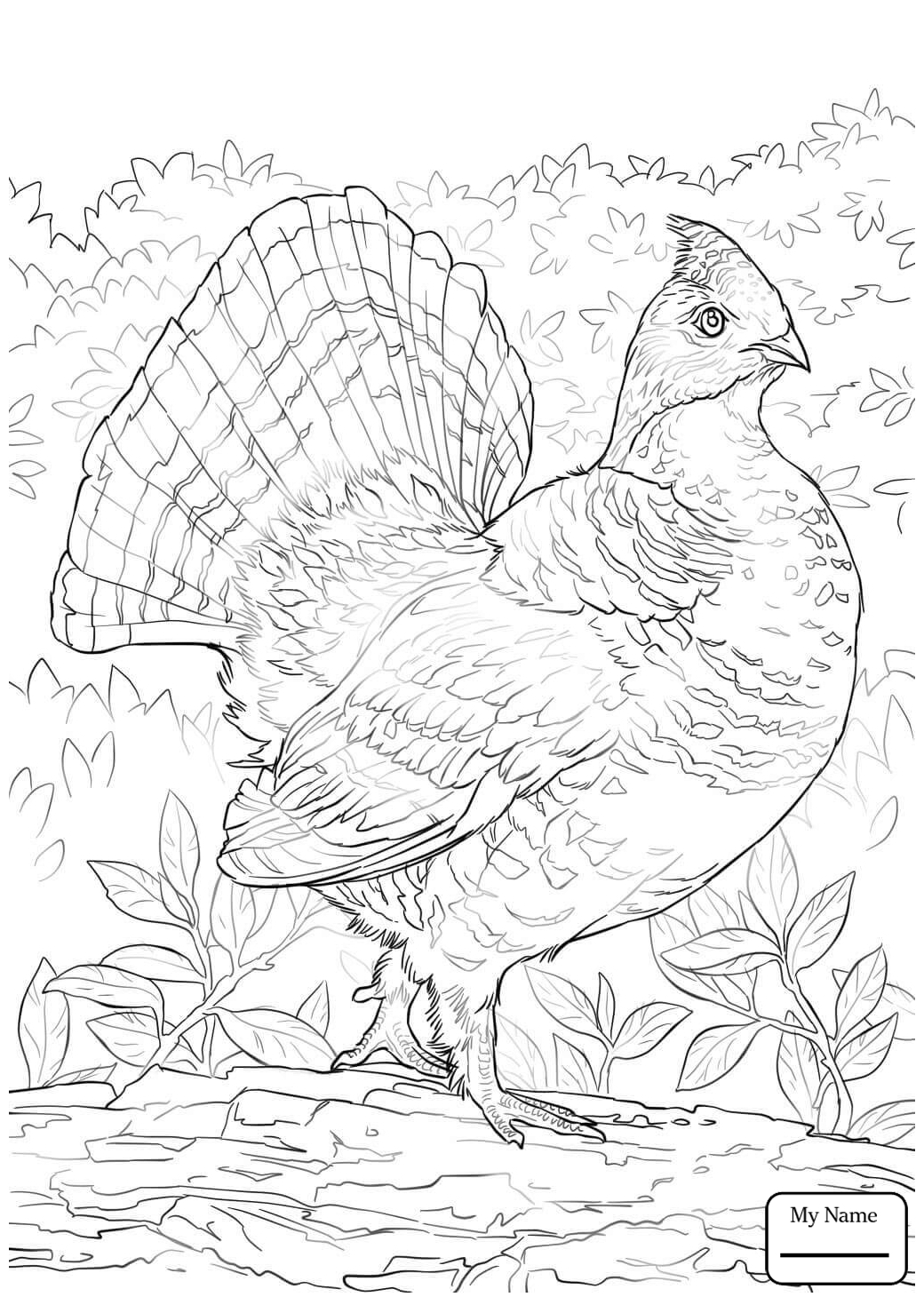 1040x1469 Crammed Ruffed Grouse Coloring Page Best