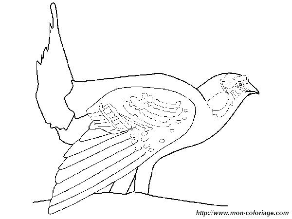 600x450 Grouse Animal Coloring Pages Animals Coloring Pages Printable