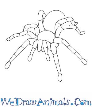 300x350 How To Draw A Tarantula