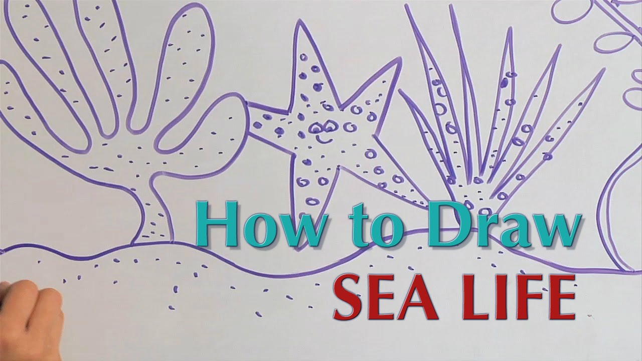 1280x720 How To Draw Sea Life