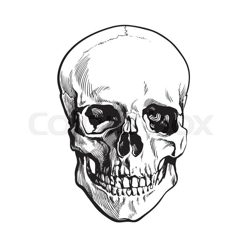 800x800 Hand Drawn Human Skull, Anatomical Model, Black And White Sketch