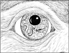 235x181 Eye Reflection Drawing Did A Drawing Of A Birds Eye. I'M Not