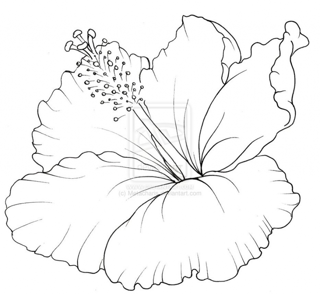 1024x941 Hibiscus Flower Drawing