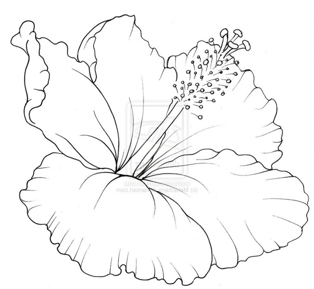 1024x940 Hibiscus Flower Drawing Draw Hibiscus Flower And Label