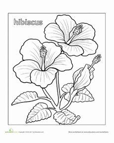 230x289 Hibiscus Flower Drawings